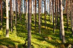 Finland Stock Image