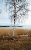Finland, early spring Stock Photos