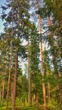 Finland Forest Royalty Free Stock Images