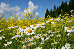 Finland: Heat of summer. Colorful meadow on a beautiful and hot summer day full of brightness and scents Royalty Free Stock Photography