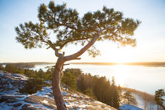 Finland, Helsinki, late autumn. Baltic sea, bay. Still water of the gulf, islands with forests. Low winter sun, dusk, pine trees on rock. Scenic peaceful Stock Photography