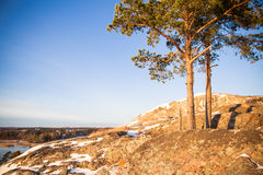 Finland, Helsinki, late autumn. Baltic sea, bay. Still water of the gulf, islands with forests. Low winter sun, dusk, pine trees on rock. Scenic peaceful Royalty Free Stock Images