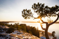 Finland, Helsinki, late autumn. Baltic sea, bay. Still water of the gulf, islands with forests. Low winter sun, dusk, pine trees on rock. Scenic peaceful royalty free stock photos