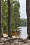 Finland sand beach and forest in Helvetinjarvi national park. Royalty Free Stock Photography