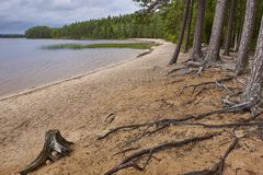 Finland sand beach and forest in Helvetinjarvi national park Royalty Free Stock Image