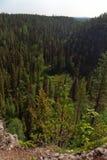 finland skog royaltyfri bild