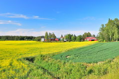 finland sommar royaltyfri bild