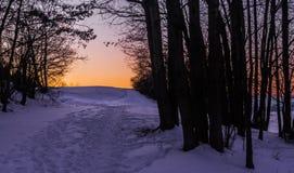 finland sylwetek zmierzchu drzew zima obraz royalty free