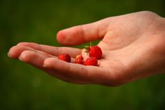 Finland: Wild Strawberries Stock Photos
