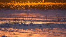 Finland, Winter, Snow, Ice, Reeds Royalty Free Stock Photos
