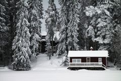 Finland: Wintery forest Royalty Free Stock Image