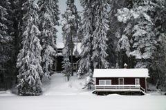 Finlandia: Bosque hivernal Imagen de archivo libre de regalías