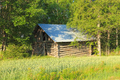 Finlandia: Granero viejo en el campo de trigo Foto de archivo