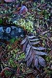 Finlandia: Hojas escarchadas en otoño Fotografía de archivo libre de regalías