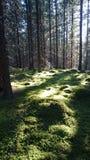 Finlandia natura Zdjęcie Royalty Free