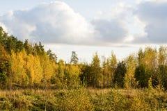finlandssvensk skog Arkivbilder