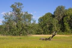 Finley National Wildlife Refuge Imágenes de archivo libres de regalías