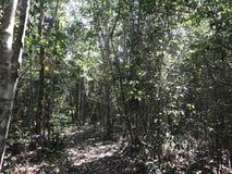 Finna en bana in i djungeln arkivfoto