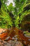 Finnich-Schlucht nahe Loch Lomond, Schottland stockbilder