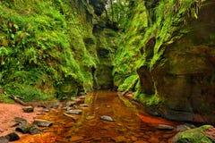 Finnich-Schlucht nahe Loch Lomond, Schottland lizenzfreies stockfoto