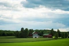 Finnischer Landwirtschaftsbauernhof nahe einem grünen Weizen und Haferfeldern Stockfoto