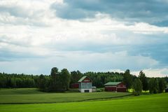 Finnish agriculture farm near a green wheat and oats fields Stock Photo
