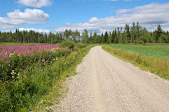 Finnish backroad. Road in rural Finland stock image