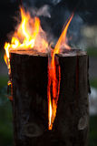 Finnish candle. Burning log in night forest Stock Photography