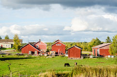 Finnish cottages. In a autumnal season Royalty Free Stock Photography