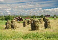 Free Finnish Country Ladscape With Vintage Haystackes Royalty Free Stock Photography - 17335837