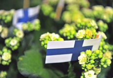 Finnish flags with plants Royalty Free Stock Photo