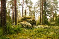 Finnish forest in autumn Stock Photography