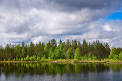 Finnish forest. On the bank of lake under a cloudy sky Royalty Free Stock Image