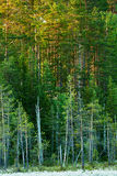 Finnish forest at dawn Stock Photos
