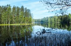 Lake in the finnish forest in summer royalty free stock photos
