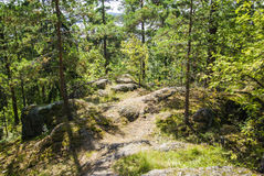 Finnish Forest Royalty Free Stock Images