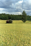 Finnish grain field Stock Photo