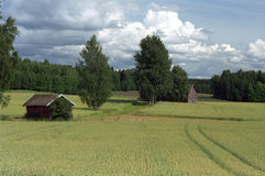 Finnish grain fields Royalty Free Stock Image