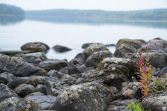 Finnish lake stock photo