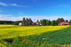 Finnish landscape Royalty Free Stock Image