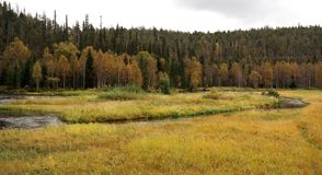 Finnish nature. Autumn in Oulanka national park in Finland Stock Images