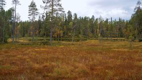 Finnish nature. A part of forest, meadow and swamp in finnish Oulanka national park Royalty Free Stock Photos