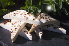 Finnish squeaky cheese. In front of herbs Royalty Free Stock Photo