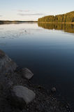 Finnish summer evening. Lakeside view with already setting sun. Small mallard swimming across the frame. Stones and gravel in foreground Royalty Free Stock Images