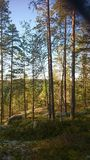 Finnland-Natur Stockfotografie