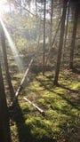 Finnland-Natur Lizenzfreies Stockfoto