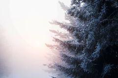 Finnland-Wald Lizenzfreie Stockfotografie