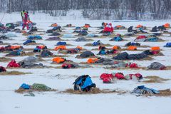 Finnmark, Noorwegen 9 Maart, 2019: Hond sledding competities Finnmarkslopet Teams op vakantie stock foto