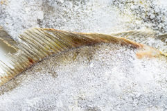 Fins frozen fish Stock Photography