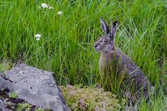 Fins konijntje Royalty-vrije Stock Fotografie